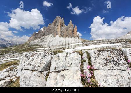 View of the Three Peaks of Lavaredo on a summer day Sesto Dolomites Trentino Alto Adige Italy Europe - Stock Photo
