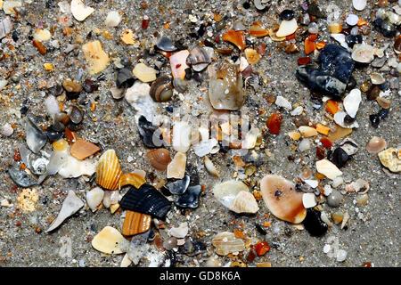 assorted seashells on in scotland soft focus stock photo