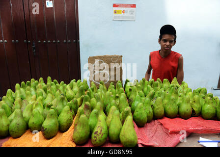 A young Cuban boy selling fresh Avocados in Havana, Cuba. - Stock Photo