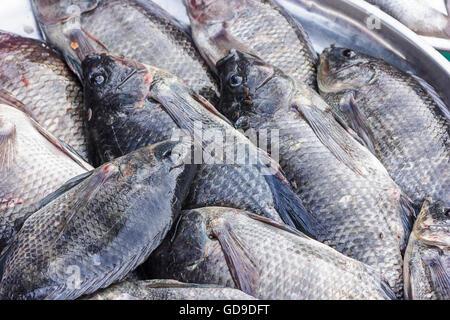 fresh Tilapia in market songkhla - Stock Photo