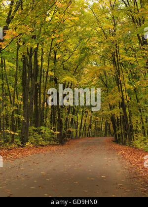 Winding unpaved road through fall nature scenery, Algonquin Provincial Park, Ontario, Canada - Stock Photo