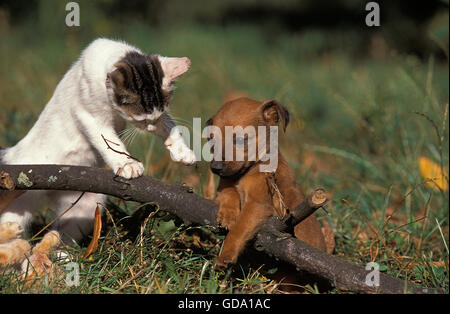 DOG AND COMESTIC CAT PLAYING WITH A BRANCH