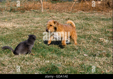 Cat and Dog Meeting