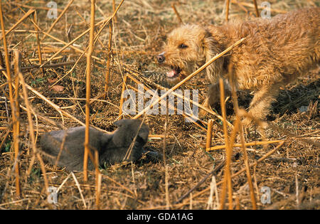 Dog with Cat, Defensive Posture