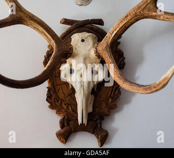 Smartness Design Deer Head Wall Mount Home Designing. Personalised Wooden S Head  Wall Decoration By Create Gift Love