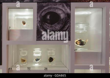 London, UK. 13 July 2016. Eye specimen on display. This summer, the Natural History Museum explores nature's palette - Stock Photo