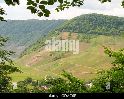 Germany, Rhineland-Palatinate, Mesenich, On the Mosel steep path, vineyards in the spring - Stock Photo