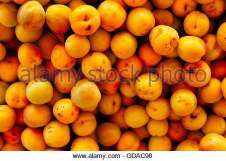 fresh apricots as background - Stock Photo