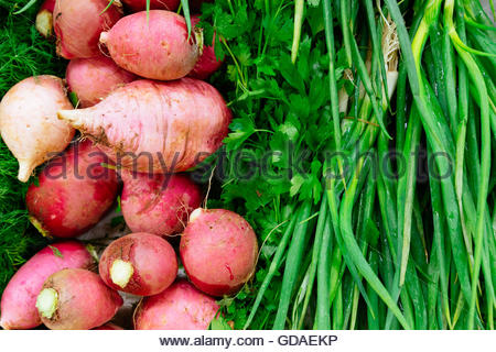 Radishes, parsley and green onion as background. - Stock Photo