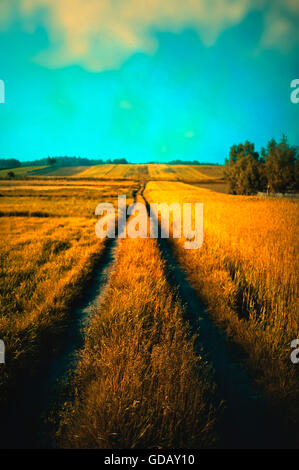 landscape with a wheat field in  village - Stock Photo