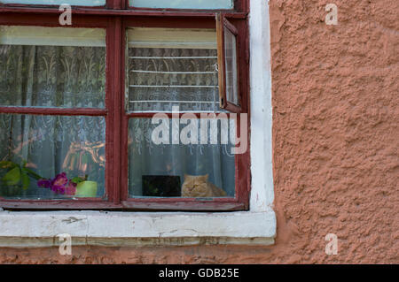 Ginger Cat Sitting on Window Sill of Old House - Stock Photo