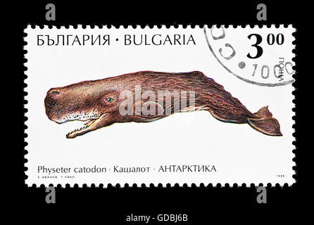 Postage stamp from Bulgaria depicting a sperm whale (Physeter macrocephalus), or cachalot. - Stock Photo