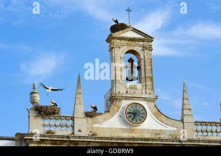 Stork nests in Faro, Algarve, Portugal - Stock Photo