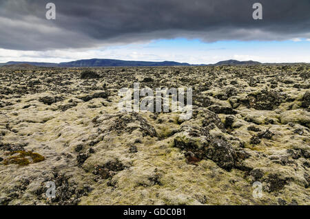 Field of lava covered with moss near the village Grindavik on the peninsula Reykjanes in southwest Iceland. - Stock Photo