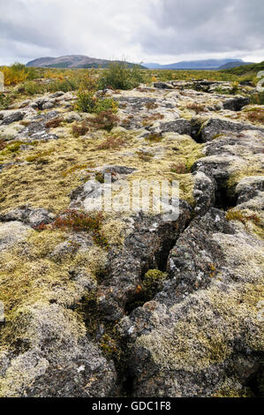 The field of lava Grahraun covered with moss near the village Husafell in west Iceland. - Stock Photo