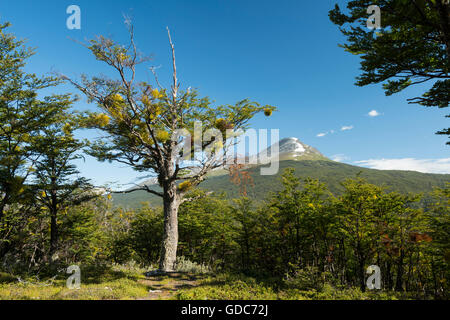 South America,Tierra del Fuego,Argentina,Ushuaia,Tierra del Fuego,National Park - Stock Photo