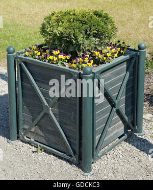 Green mass production wooden flowerpot with the spring blossoming pansies in the public gardens. Sunny day - Stock Photo