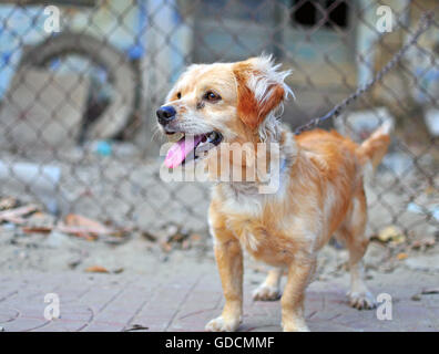 Cute little homeless dog in the street - Stock Photo