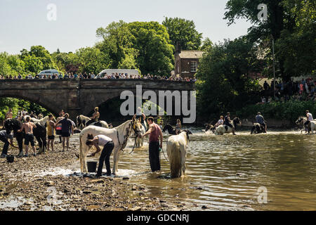 Washing horses in the river at Appleby Horse Fair in Cumbria - Stock Photo