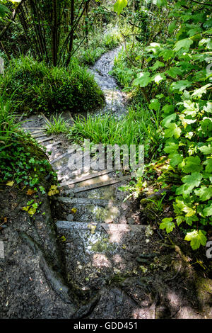 Winding steps and paths on the south West Coast Path through The Undercliff near Lyme Regis in Dorset - Stock Photo
