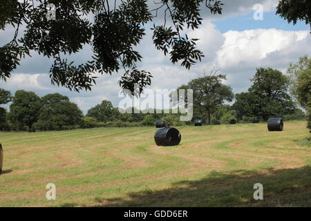 Cut and rolled hay on battle of Boswoth fields - Stock Photo