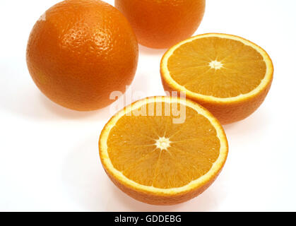 Orange, citrus sinensis, Fruits against White Background - Stock Photo