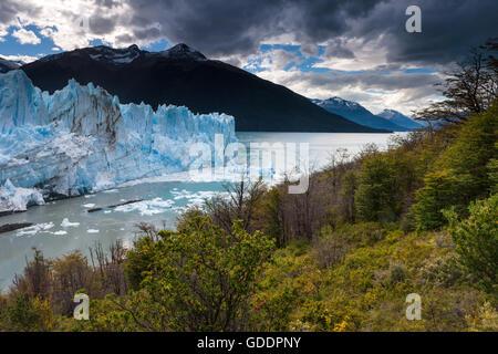 Perito Moreno,glacier,Argentina,Patagonia - Stock Photo