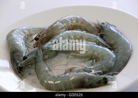 Langenpreising, Germany. 3rd May, 2016. Freshly caught and killed prawns on the prawn farm 'Crusta Nova' in Langenpreising, - Stock Photo
