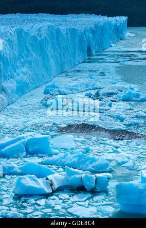 South America,Argentina,Patagonia,Santa Cruz,El Calafate,Los Glaciares,National Park,Perito Moreno,glacier,UNESCO,Worl - Stock Photo