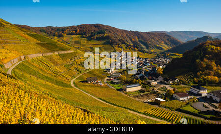 Ahrtal,cultivation,Germany,Eifel,Europe,autumn,autumnal,agriculture,Mayschoss,useful plant,parish church,Saint Nikola - Stock Photo