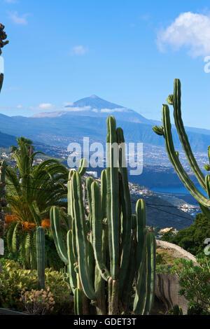 Botanical Garden in El Sauzal, Teide Mountain, Tenerife, Canary Islands, Spain - Stock Photo