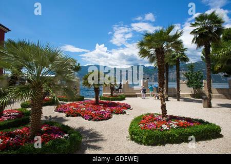 Gardens, Palazzo dei Capitani, Malcesine, Lake Garda, Veneto, Italy / Lago di Garda - Stock Photo