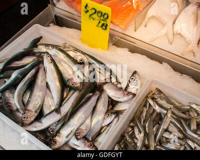 Fresh Fish Display for $2.00 a Pound, Chinatown, NYC, USA - Stock Photo