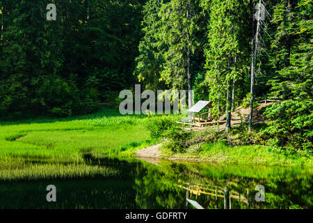 wooden bower near the lake in the pine forest in morning light - Stock Photo
