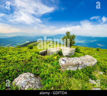 small tree behind the boulders on the hillside meadow on top of mountain range in morning light - Stock Photo