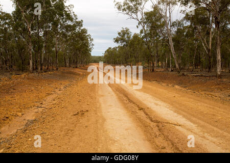Long straight red dirt road leading through tall eucalyptus woodlands to distant horizon in outback Australia - Stock Photo