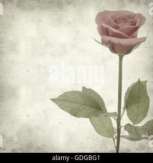 textured old paper background with pink rose - Stock Photo