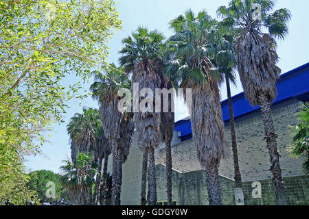 LISBON, PORTUGAL - JUNE 16, 2015: Camoes Theater behind palm trees. It began being used by the Lisbon Symphony Orchestra. - Stock Photo