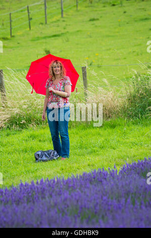 Visitors enjoy the lavender on an Open Day at Lordington Lavender Farm, Lordington, Chichester, West Sussex UK in - Stock Photo