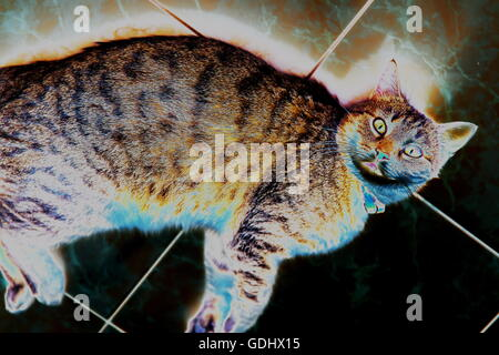 beautiful stripped cat lying down on a marmor floor. computer effect. - Stock Photo