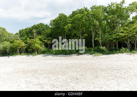 Trees and bushes grow on a sand dune in Kolobrzeg - Stock Photo