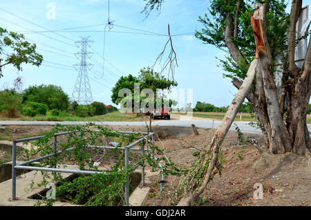 Big tree broken from wind storm at outdoor near canal watercourse waterway of water supply in countryside Nonthaburi, - Stock Photo