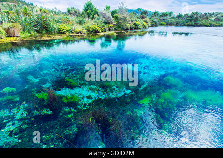 Te Waikoropupu Springs, Pupu Springs in the Golden Bay region on the South Island  in New Zealand - Stock Photo
