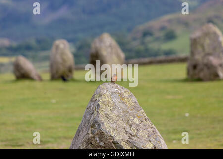 Common chaffinch, Fringilla coelebs, on top on one stone in Castlerigg stone circle, Keswick, Cumbria, North West - Stock Photo