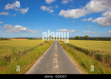 A small country road in the Yorkshire wolds running through ripening wheat fields in summer under a cloudy sky. - Stock Photo