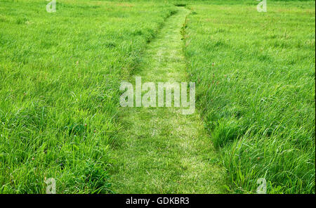 Very clear and lightly curved cut path leading through a field of rough fresh green grass - Stock Photo