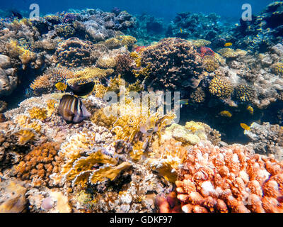Colorful butterfly fish in an aquarium stock photo for Other fish in the sea