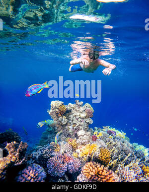Underwater shoot of a young boy snorkeling and diving in a tropical red sea coral reef with Klunzinger's Wrasse - Stock Photo