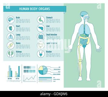 Human body health care infographics, with medical icons, organs, charts, diagarms and copy space - Stock Photo