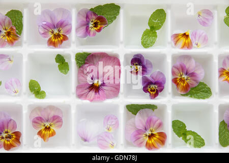 closeup Edible flowers and mint in ice cubes tray on white vintage linen background - Stock Photo